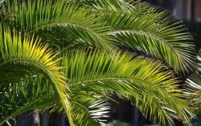 Rozważanie na Niedzielę Palmową